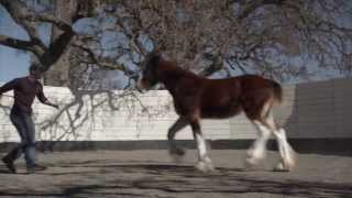 """Best Commercials of 2013: Budweiser, """"The Clydesdales Brotherhood"""""""