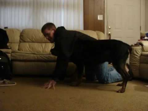 Rottweiler Attacks Owner While Clipping Nails Youtube