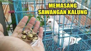 Download CARA PASANG SAWANGAN KALUNG KHAS LOMBOK