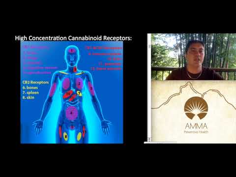 Dr Teh: the Endo-Cannabinoid System