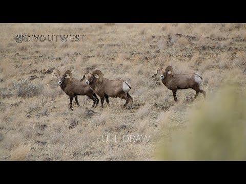 Only Once: Oregon Archery Ram Hunt