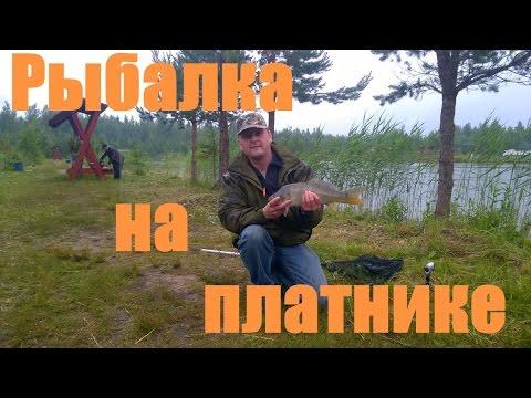 Рыбалка на фидер на платнике в Лепсари - YouTube