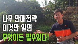 나무 판매전략과노하우 아낌없이 대방출~!!