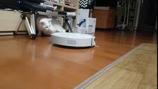 샤오미 로봇청소기 4세대 E20