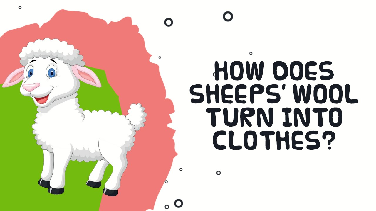 how does sheep wool turn into clothes interesting facts about