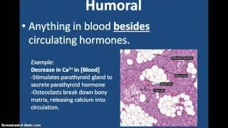 Endocrine System Stimuli