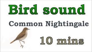 Bird sound #7 - Common Nightingale