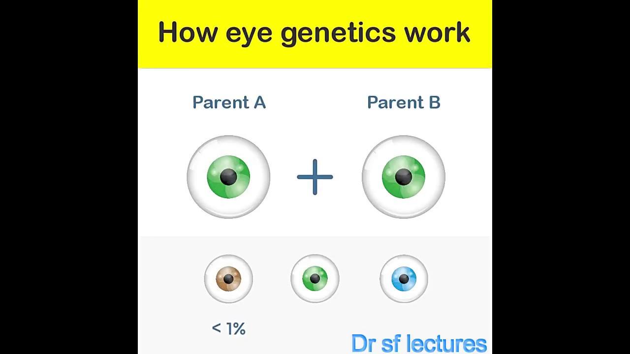 How eyes genetics works eye color genetics youtube how eyes genetics works eye color genetics ccuart Images