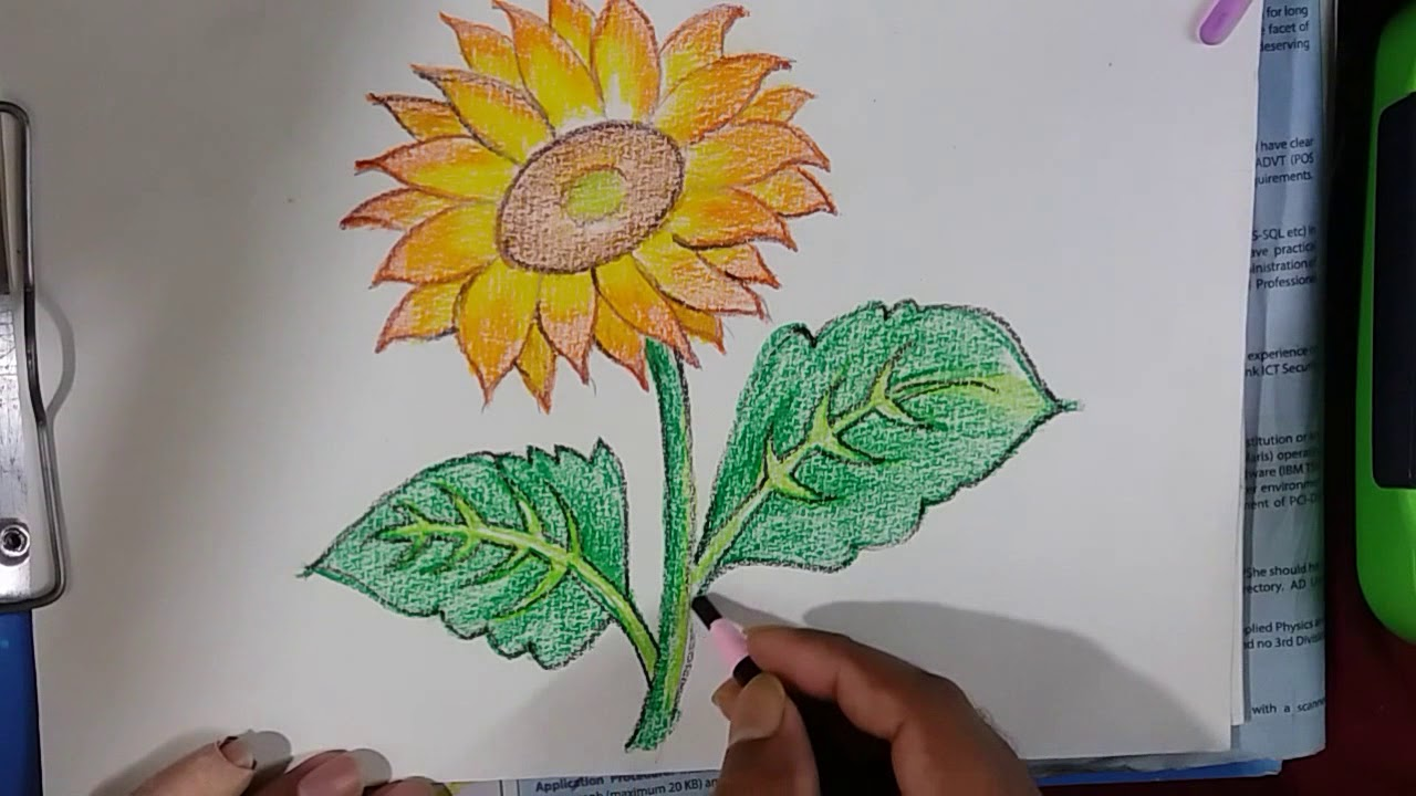 How To Draw Sunflower Draw A Sunflower And Coloring Easy Way Step By Step Youtube
