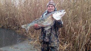 Осенняя рыбалка на сазана, Казахстан, Балхаш