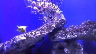 Чудеса подводного мира
