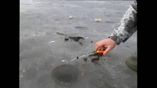 Ловля карася по последнему льду
