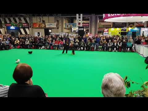 Crufts 2018 dancing dog