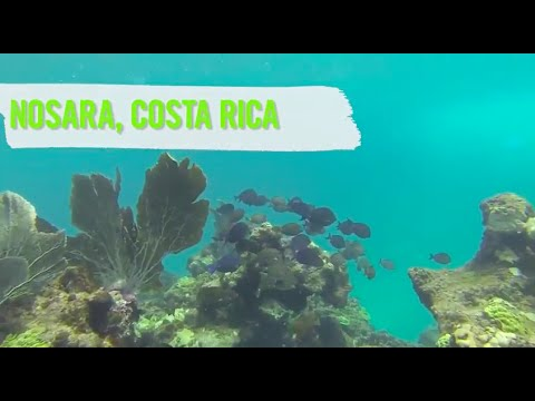 Introducing the Ultimate Fitness Adventure: Camp Fit Costa Rica!