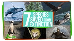7 Species That Were Saved From Extinction