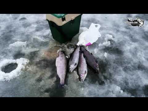 Рыболовный клуб «Русский осетр»