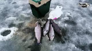 vip prud com Ловля форели и осетра перед Новым годом Подсак для рыбы на льду вы такое видели