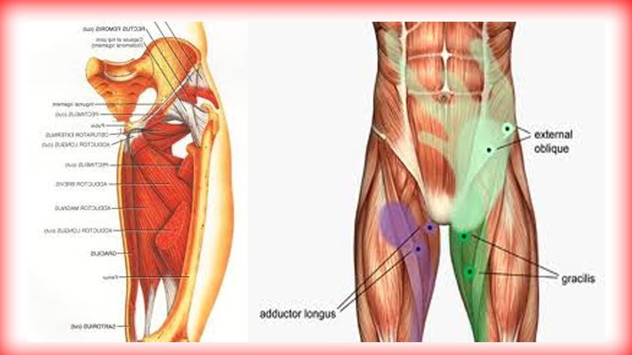 hight resolution of male groin diagram