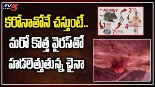 చైనాలో కొత్త వైరస్..| Hanta Virus Hulchul in China | New Virus in China | TV5 News