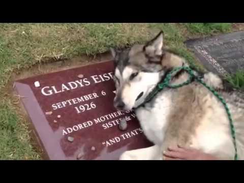 PERRO FIEL LLORA EN LA TUMBA DE SU DUEÑA, FAITHFUL DOG CRIES IN THE TOMB OF HIS MISTRESS