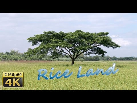 Loei, Daily Life in Isaan - Thailand 4K Travel Channel
