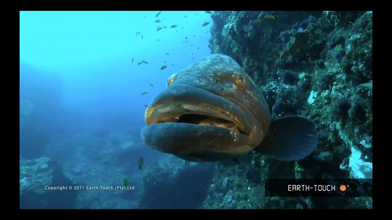 Fish that rule Lake Malawi, racing dolphins & reef animals ...