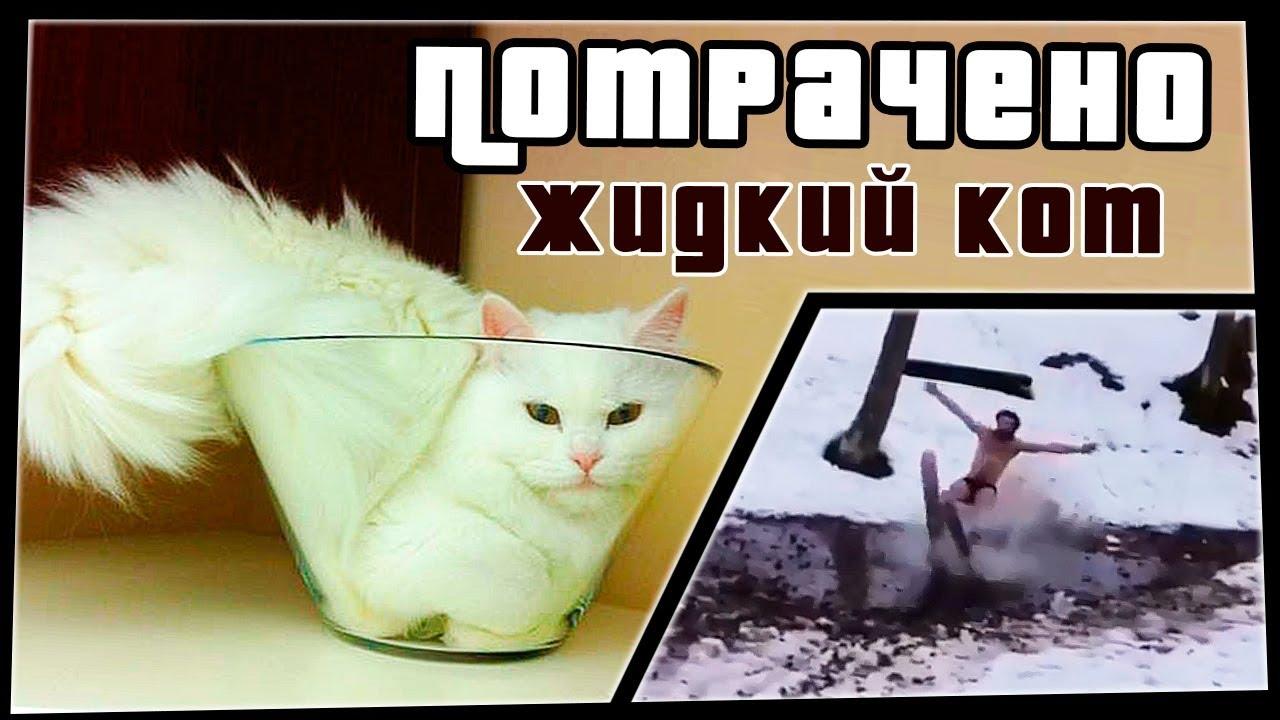 Жидкий кот | ПОТРАЧЕНО