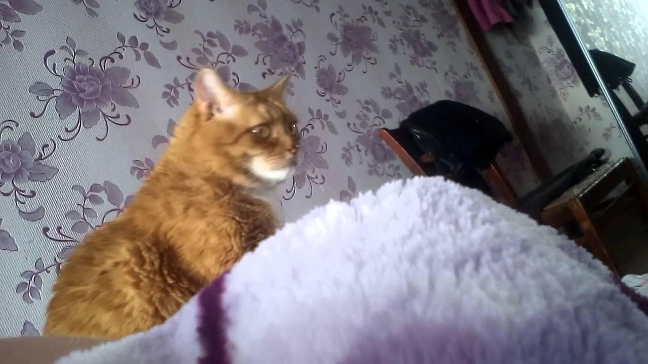 Брайан мапс мой кот пытается меня убить 1 серия