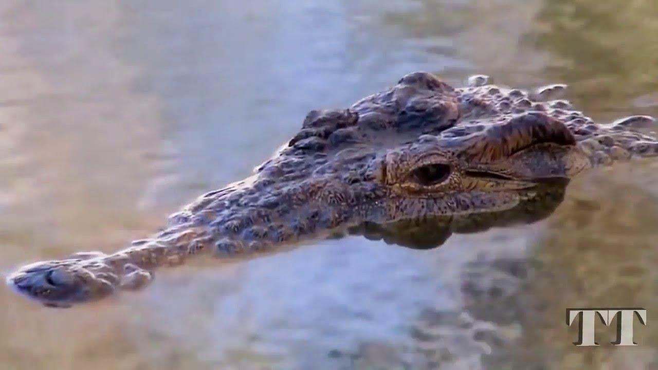 Indonesian villagers kill nearly 300 crocodiles in revenge