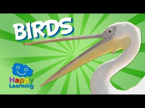 Birds   Educational Video for Kids