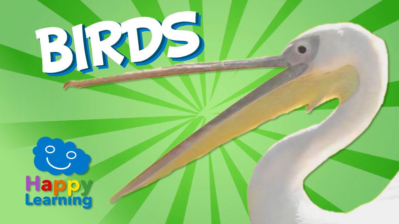 Bird Theme Preschool Activities - Fantastic Fun \u0026 Learning [ 720 x 1280 Pixel ]
