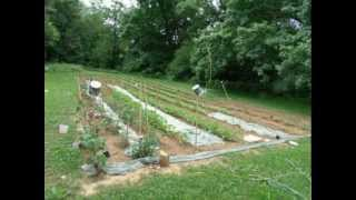 """Candidate For Governor In Tennessee Says """"get Your Garden Ready !"""""""