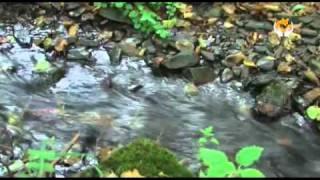 Flusskrebse, NATUR - Schülerprojekte zum nachmachen