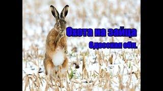 Охота на зайца, Одесская область.(www.nipnip.com.ua., 2015-03-21T19:57:05.000Z)