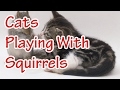 Funny cats playing with squirrels