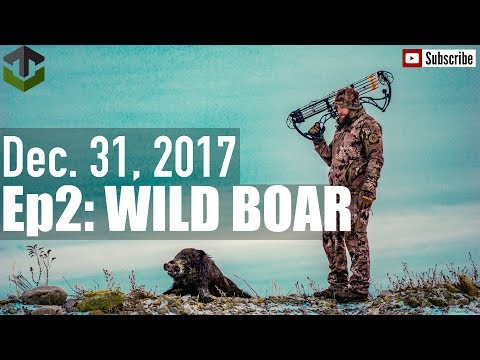 SPOT AND STALK WV WILD BOAR HUNT
