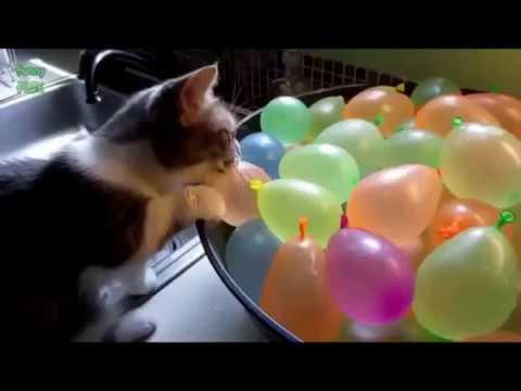 Cats vs. Balloons