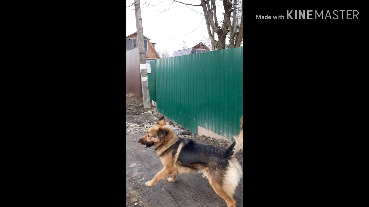 Собака-Рича. Встреча с кошкой - YouTube
