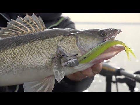 Pelagic Zander fishing in Holland - Snoekbaars op half water