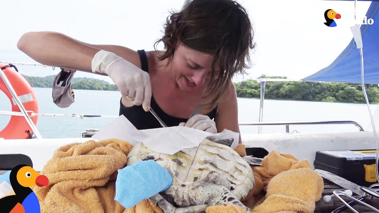 Couple Sails Around The World Saving Animals | The Dodo