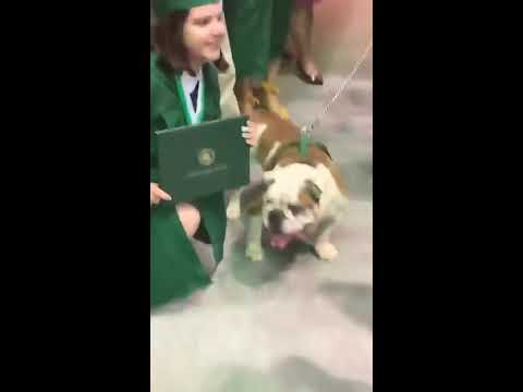 University mascot Tarzan the dog bites diploma at UPRM graduation