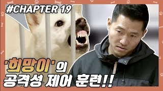 CHAPTER 19 | 강형욱, 으르렁犬과 숨 막히는 대치… #강형욱 #개통령 #개훈련사 [개는 훌륭하다]
