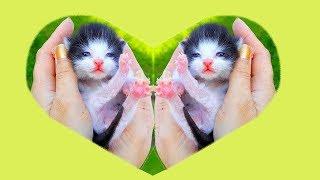 Petits chatons et des jouets pour les chatons Chansons pour les enfants en français Compilation #3