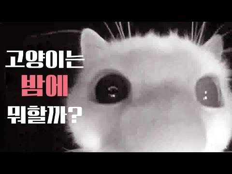 고양이는 밤에 뭐할까? 꼬부기 쵸비가 밤에 하는 7가지 행동