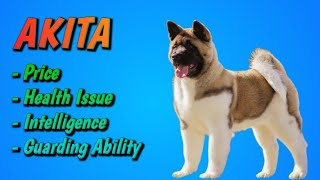 Akita  Dog Breed Review || Dogs Junction.