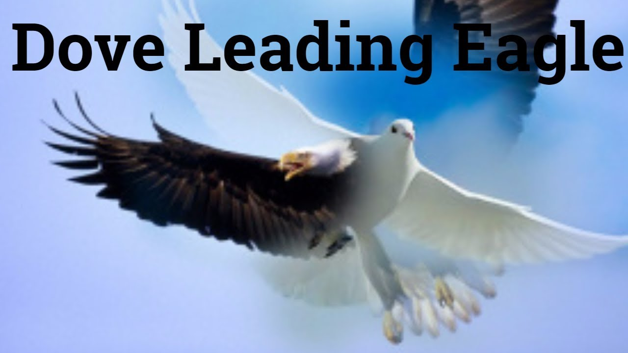 William branham dove leading eagle symbol meaning youtube william branham dove leading eagle symbol meaning biocorpaavc Choice Image