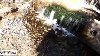 Zeus and Falcor hike through Eaton Canyon