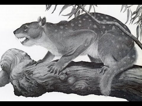 Behaviour of Australia's mysterious marsupial lion - ABC Radio