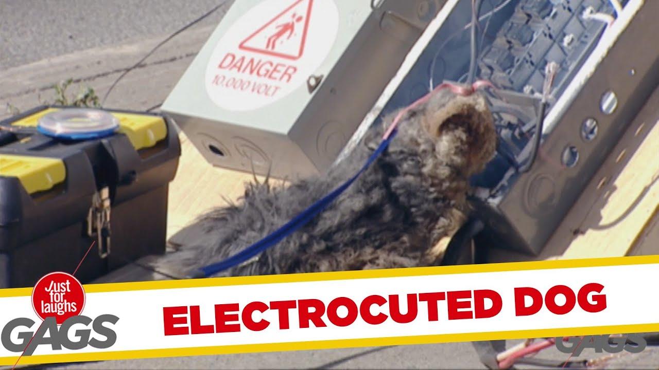 Electrocuted Dog Throwback Thursday Youtube