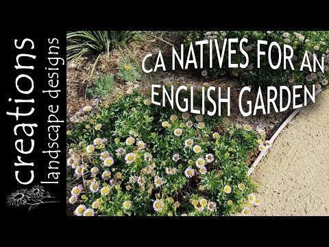 Top 3 California Native Plants For An English Cottage Garden